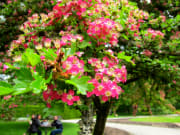 VanDusen Botanical Garden-73