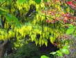 VanDusen Botanical Garden-138 (2)