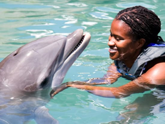 dolphin_quest02