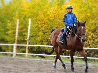 horse back riding lesson in minakami, gunma tours \u0026 activities, funenjoy horse riding lesson!