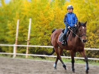 horse back riding lesson in minakami, gunma tours \u0026 activities, funenjoy horse riding lesson!