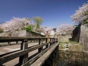 041鶴丸城跡の桜