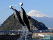 イルカと富士山