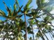 Hawaii_Maui_Temptation Tours_Kapalua