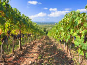 tuscany-day-trips-from-rome-1