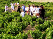 toledo_madrid_day_tour_wine_tasting_finca_loranque10