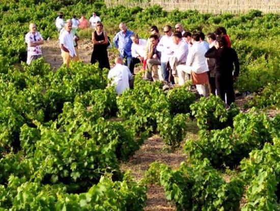 toledo_madrid_day_tour_wine_tasting_finca_loranque10