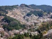 Mount Yoshino3