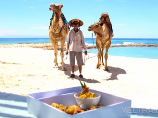 camel_safari_ritz-1036