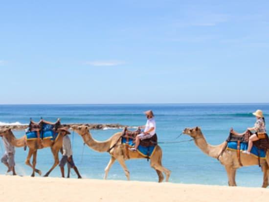 camel_safari_ritz-1034