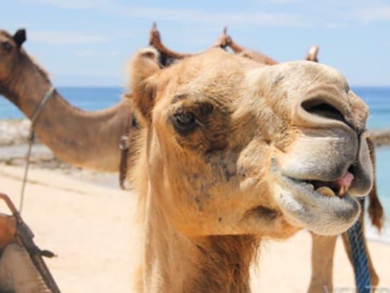 camel_safari_ritz-1033