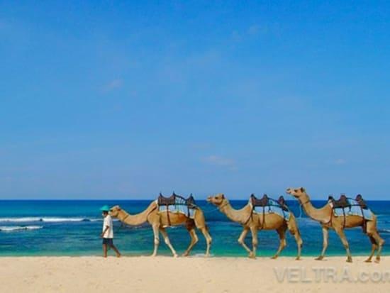 camel_safari_ritz-1003
