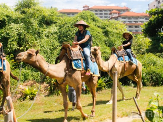 camel_safari_ritz-1008