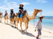 camel_safari_ritz-1010