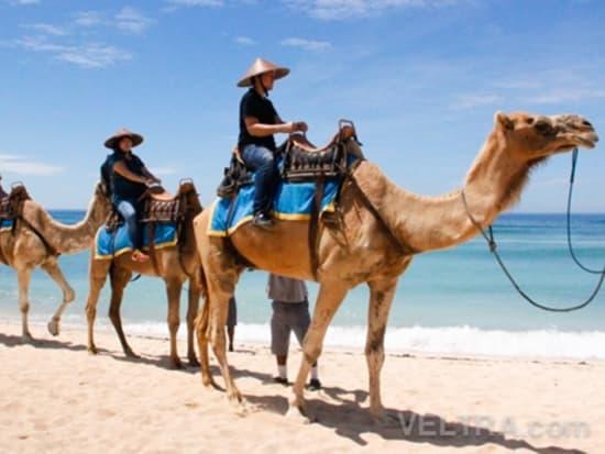 camel_safari_ritz-1012