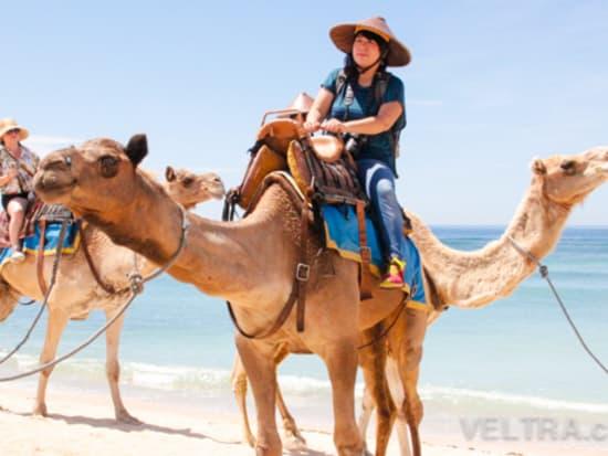 camel_safari_ritz-1013