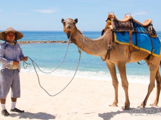 camel_safari_ritz-1016