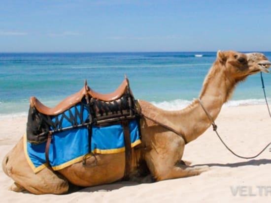 camel_safari_ritz-1015
