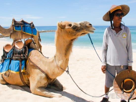 camel_safari_ritz-1017