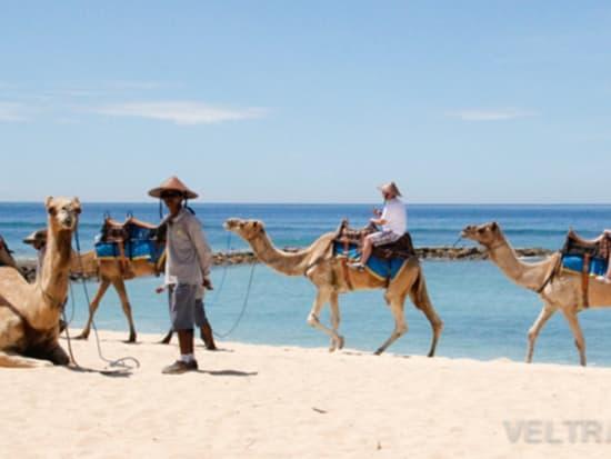 camel_safari_ritz-1020