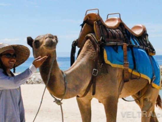 camel_safari_ritz-1019