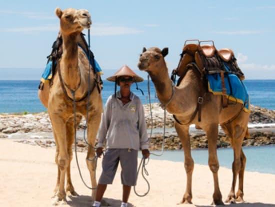 camel_safari_ritz-1022