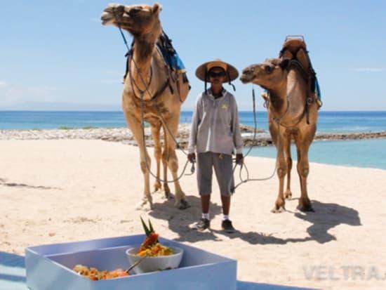 camel_safari_ritz-1023