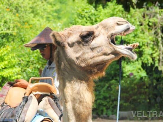 camel_safari_ritz-1030