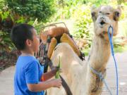 camel_safari_ritz-1029