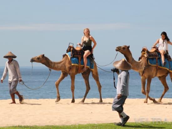 camel_safari_ritz-1028