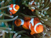 fish 4-ss