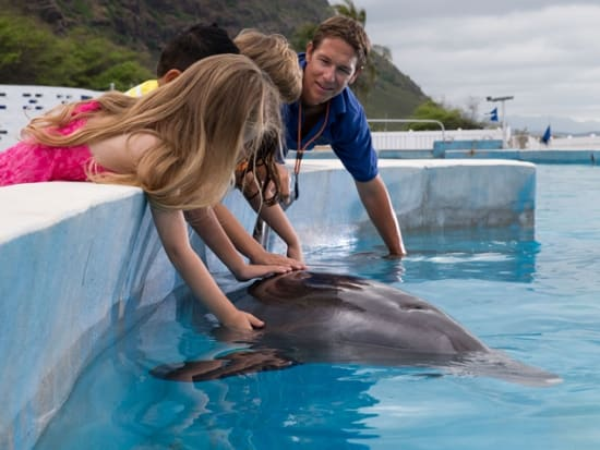 Sea life park hawaii dolphin greeting day pass oahu tours pet play with dolphins as they come greet you m4hsunfo