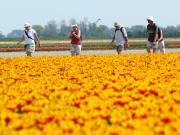 Flowerfields, Amsterdam