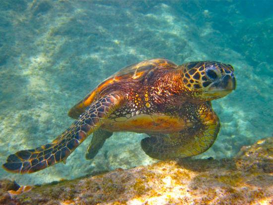 turtle_jurvetson
