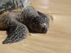 turtle_fuzzy