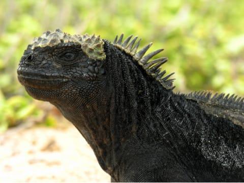 ガラパゴス発 観光ツアー