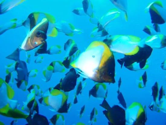 20150511004527_373299_butterflyfish