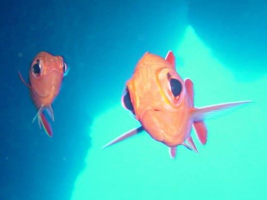 20150511004527_373299_soldierfish