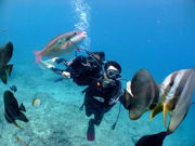 Divers in Okinawa surrounded by tropical fish
