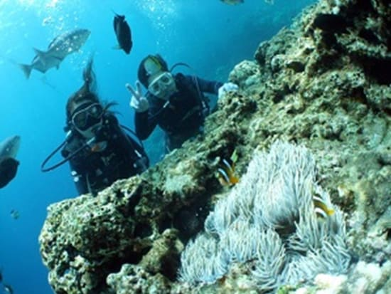 Diving in the coral reefs of Okinawa