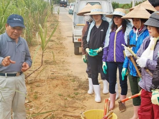 sugarcane harvesting and okinawan home cooking experience in nago