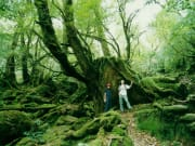 じゃらん苔の森