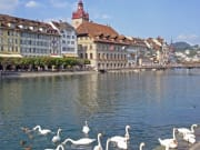 lucerne, lake, swan, switzerland