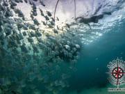 Cebu Boat Snorkeling