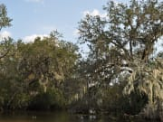 usa_new orleans_swamp bayou airboat tour