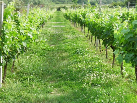 gulliver_konavle_wine_tour_(14)_34415.jpg.axd