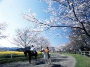 春の綾馬事公苑(綾町)2
