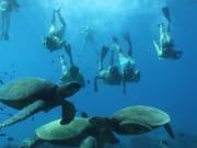 turtle14
