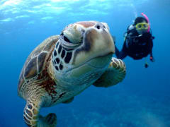 Diving with a sea turtle