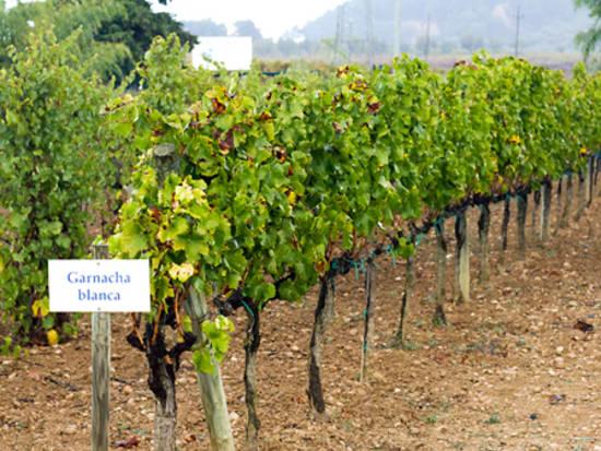 Wine tour of Pendenes area of Catalonia